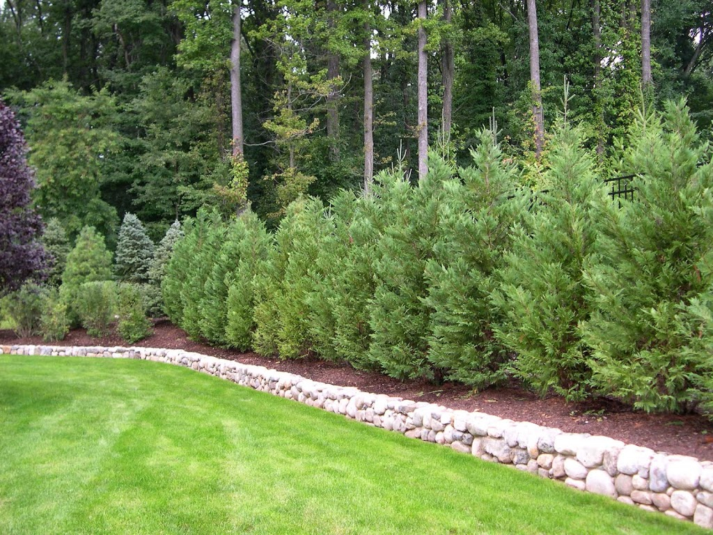 Best Trees And Plants For Privacy Truesdale Landscaping Sizing 1024 X 768