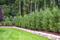 Best Trees And Plants For Privacy Truesdale Landscaping pertaining to measurements 1024 X 768