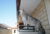 Cat Enclosures And Cat Fences With Photos Cat World throughout proportions 3888 X 2592