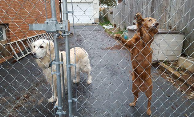 Dog Proof Fence Gate Latch Fence Ideas Site