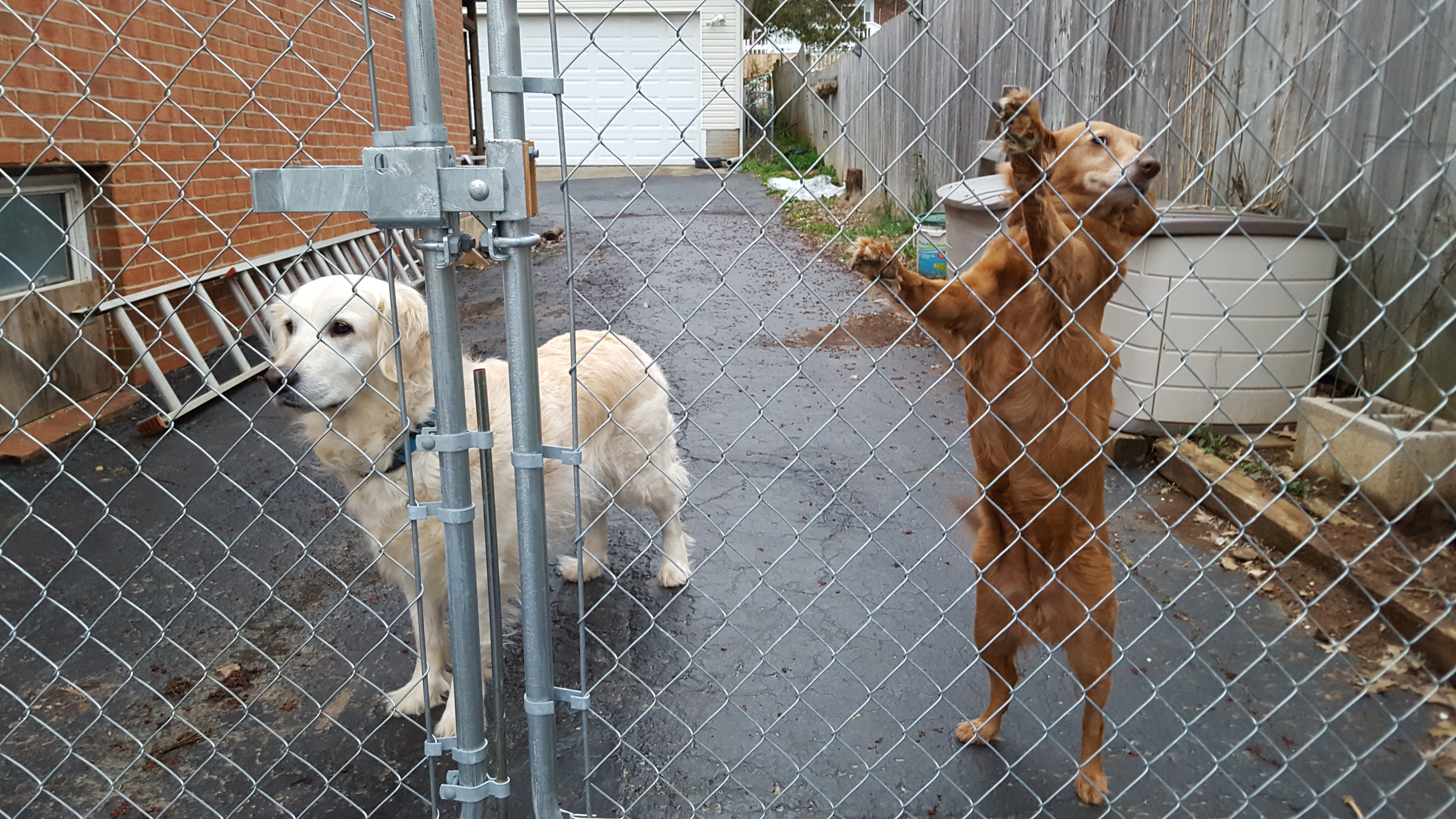 Dog Proof Fence Gate Latch • Fence Ideas Site