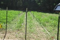 Four Wire Electric Fence System Best Control Of Deer Access To Food with regard to dimensions 4320 X 3240