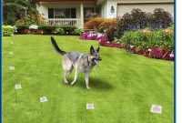 High Tech Pets X 10 Electronic Dog Fence Keeps Your Pet Safe for size 1260 X 990