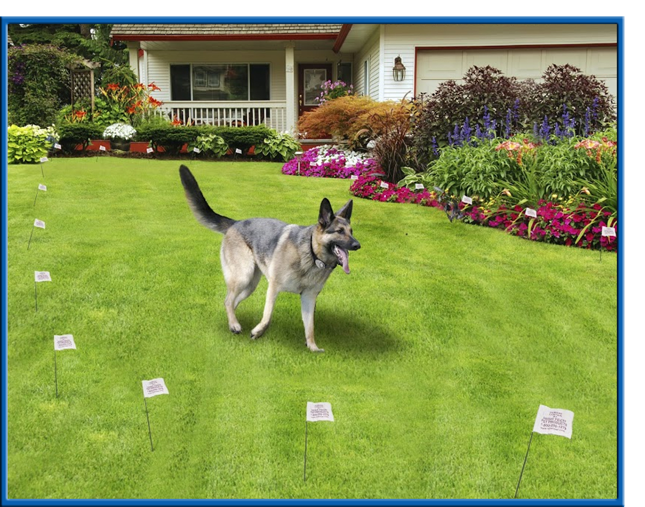 High Tech Pets X 10 Electronic Dog Fence Keeps Your Pet Safe within proportions 1260 X 990