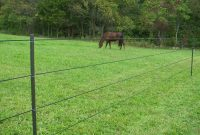 Minimizing Hazards For Horses Behind Electric Fences Pasturepro with regard to measurements 2128 X 2832