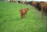 One Wire Electric Fences Pasturepro in measurements 2832 X 2128