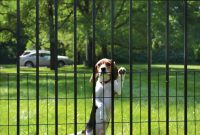 Pet Fence Specialty Designs Sp Jerith Aluminum Fence with regard to measurements 878 X 1092
