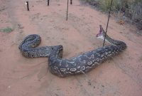 Pictures Jokes And Other Stuff Snake Meets Electric Fence intended for dimensions 1600 X 1200