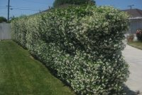 Plants To Cover A Chain Link Fence The Smarter Gardener in dimensions 2592 X 1944