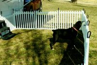 Portable Dog Fence For Camping Peiranos Fences Yard Landscaping intended for dimensions 1440 X 1080