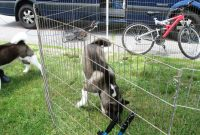 Portable Dog Fencing Outside Design Idea And Decorations with proportions 1024 X 768