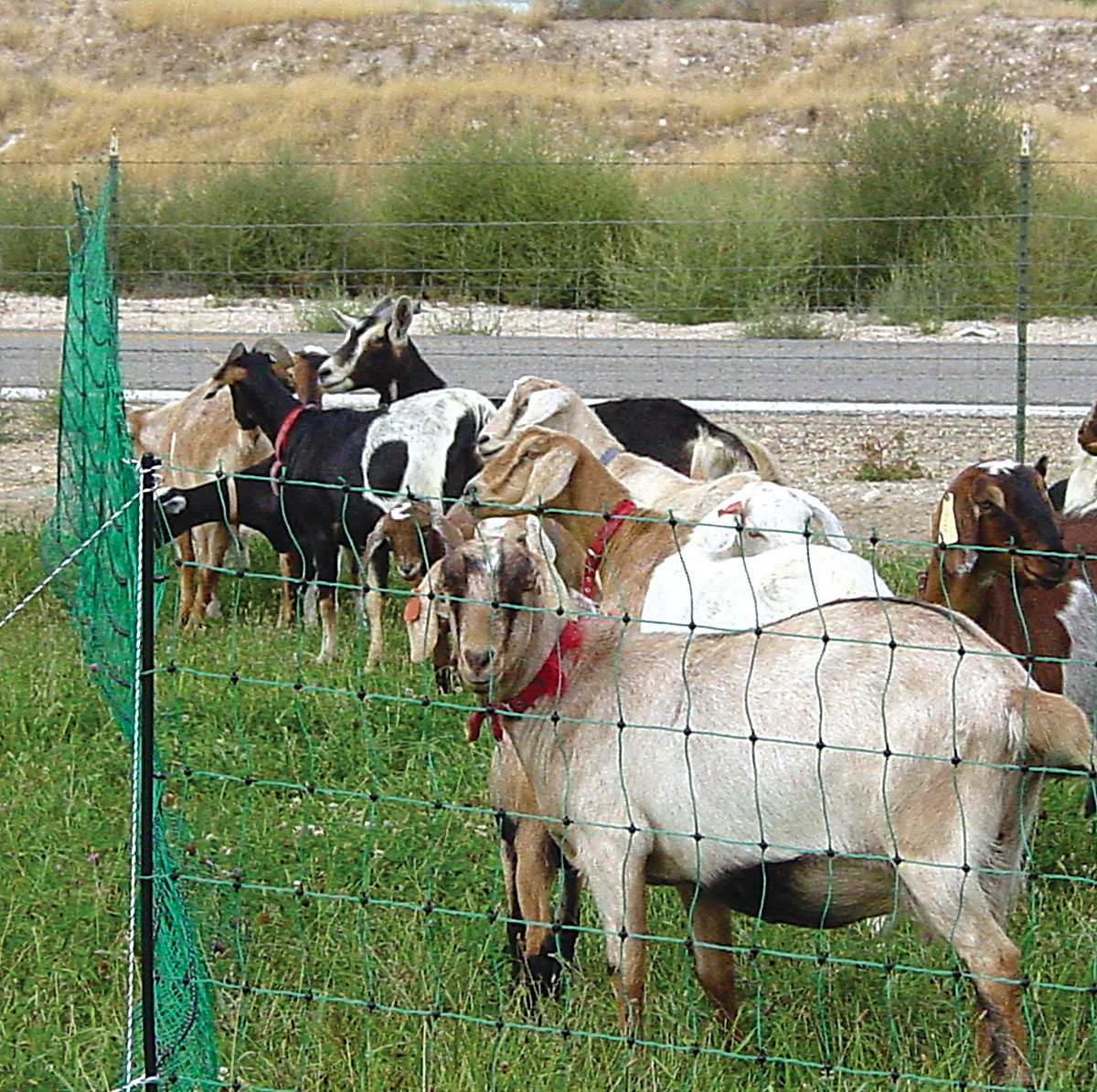 Poultry And Goat Electric Mesh Net Fence Powerfields Wire Tape throughout measurements 1200 X 1195