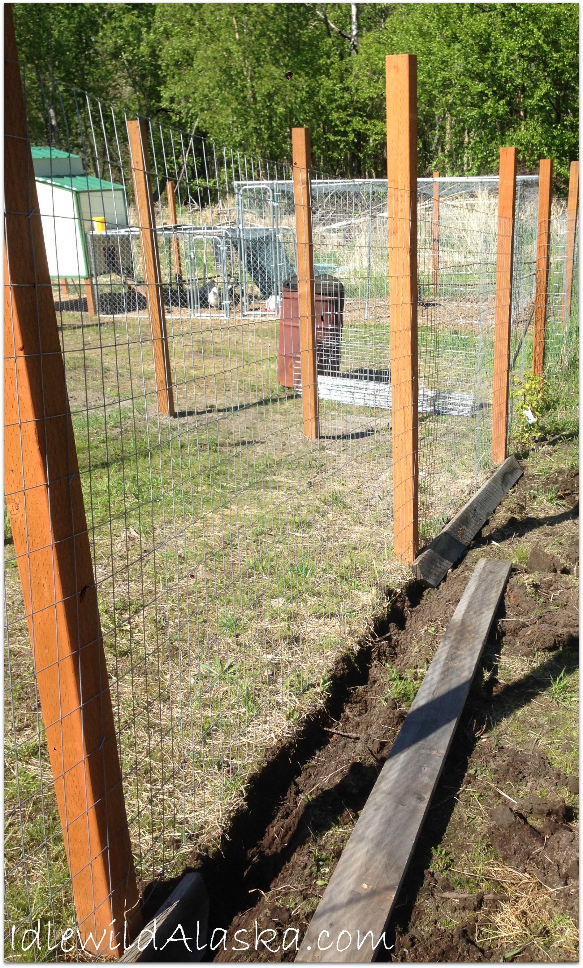 Chicken Run Fence Design • Fence Ideas Site