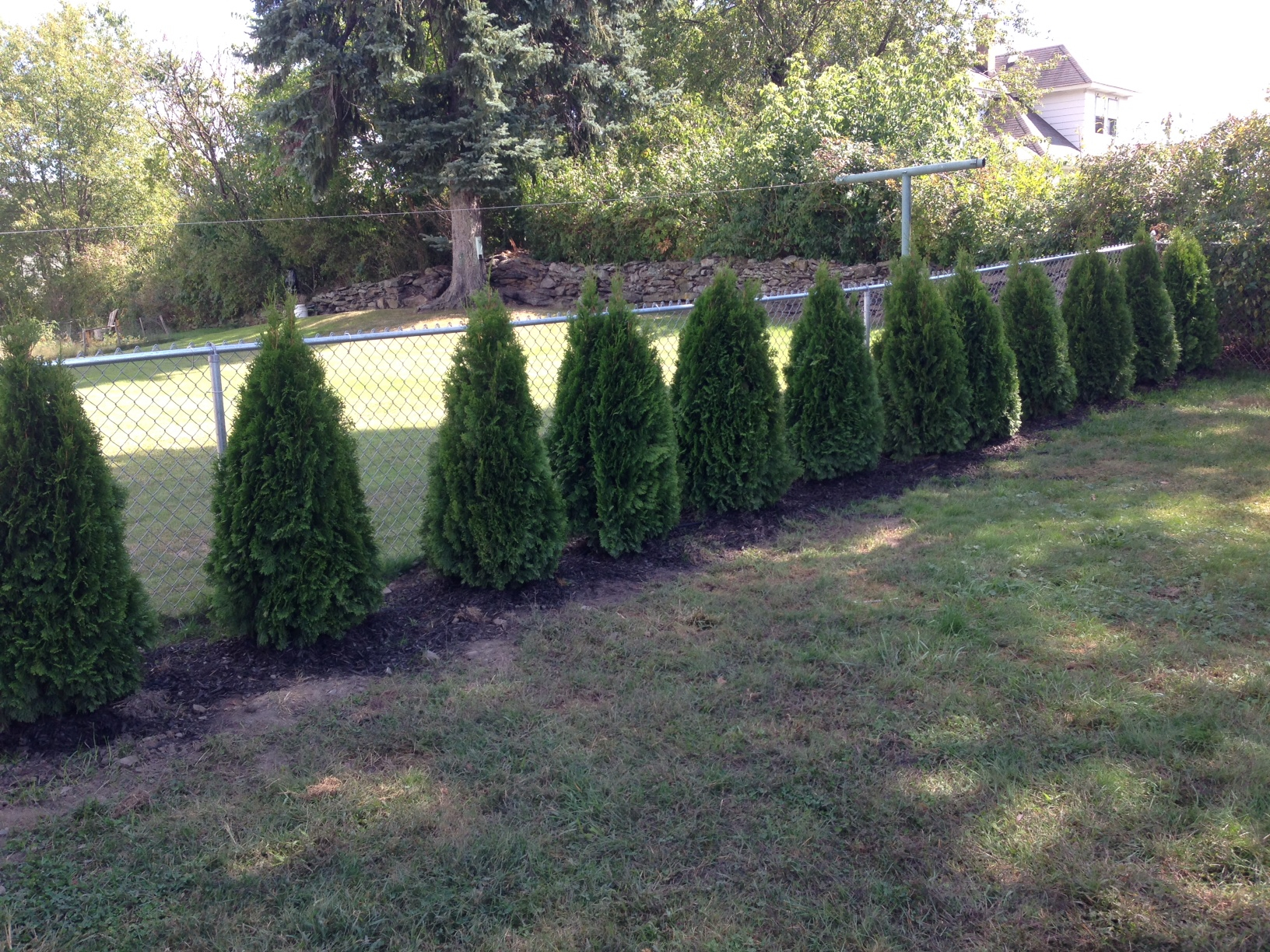 Privacy Fence Trees Image Fence Ideas Privacy Fence Trees Ideas with measurements 1632 X 1224