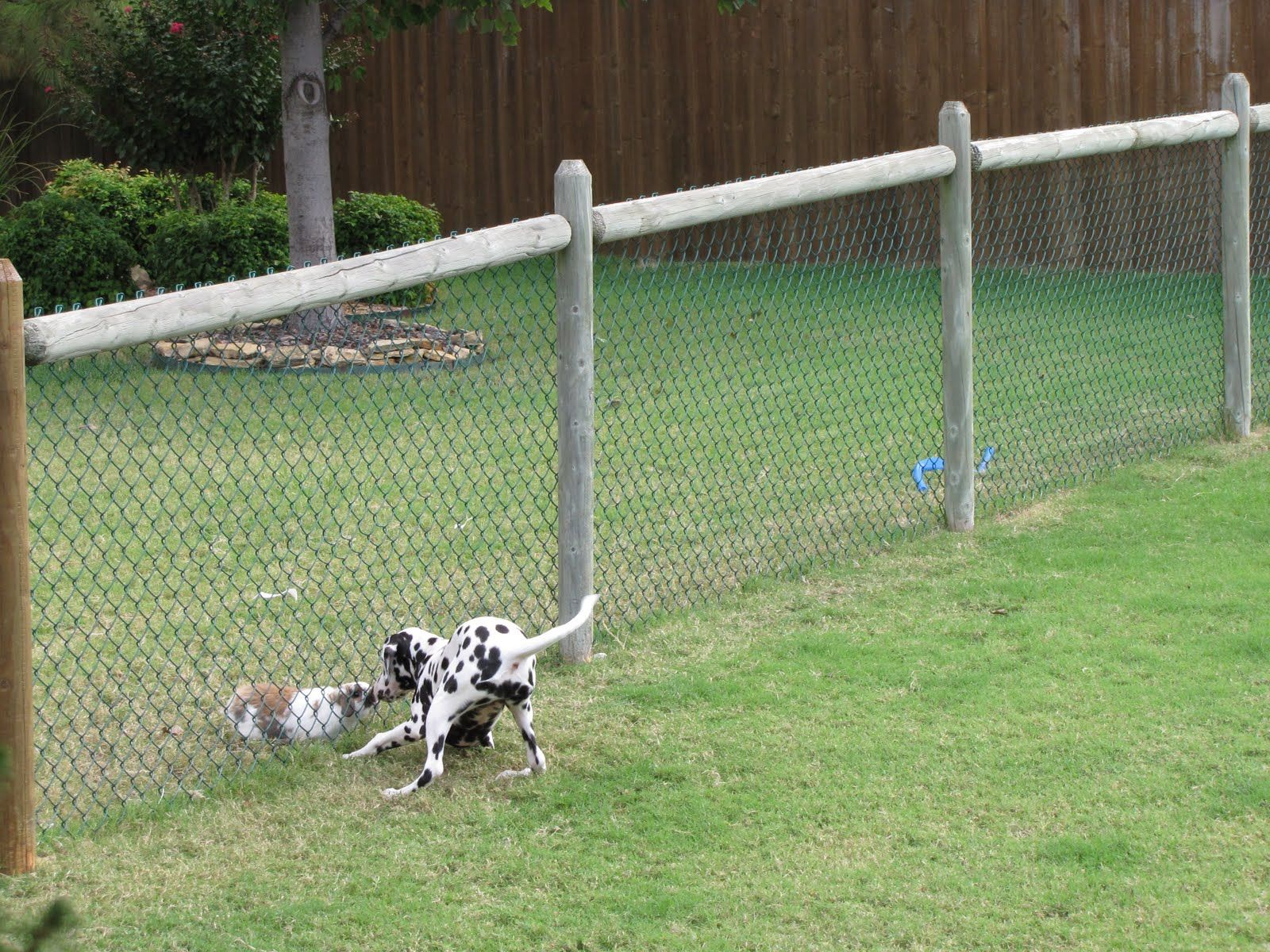 Retractable Fence For Dogs Outdoor Designs Throughout Sizing 1600 X 1200