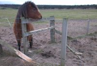 Stop Fence Destruction Horses Crib Biting Or Chewing with measurements 1600 X 902