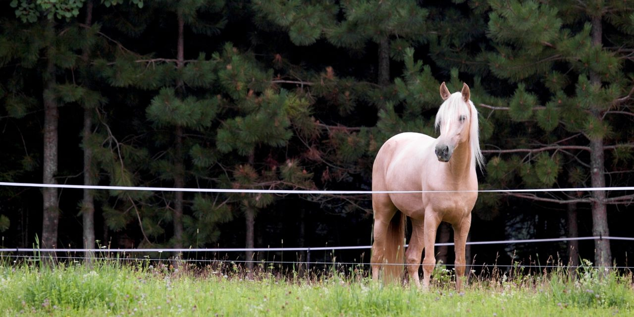 The Ins And Outs Of Temporary Horse Fencing The Horse for sizing 1280 X 640