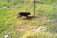 Walmart Dog Fence Wire House Of Eden Innovative Walmart Dog pertaining to measurements 1280 X 720