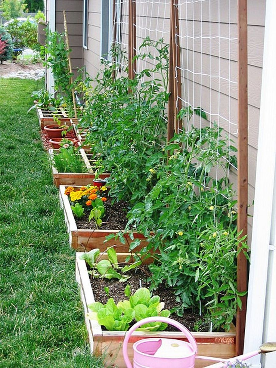 62 Affordable Backyard Vegetable Garden Designs Ideas intended for dimensions 900 X 1199