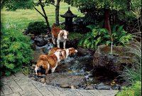 Backyard Ideas For Dogs Backyards Dog Friendly Garden inside sizing 1000 X 1366