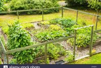 Backyard Vegetable Garden Stock Photos Backyard Vegetable pertaining to dimensions 1300 X 956