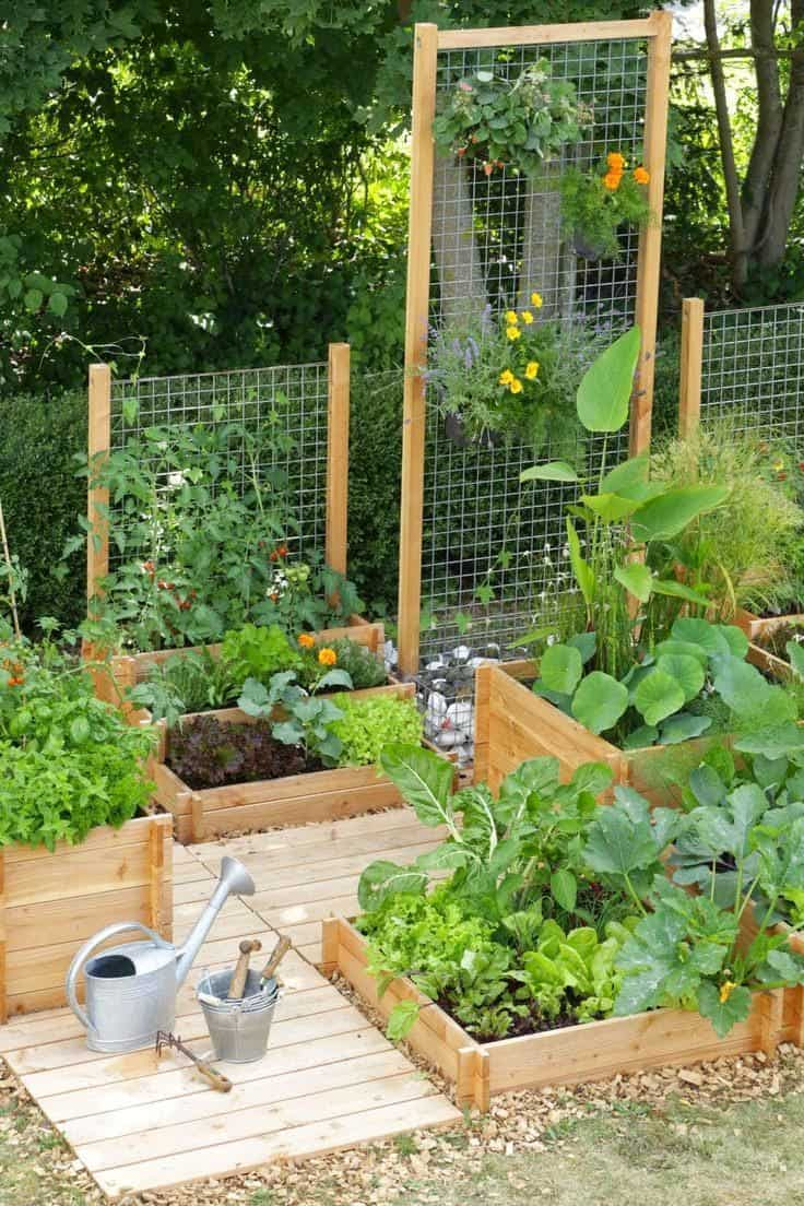 Best 20 Vegetable Garden Design Ideas For Green Living with dimensions 736 X 1104