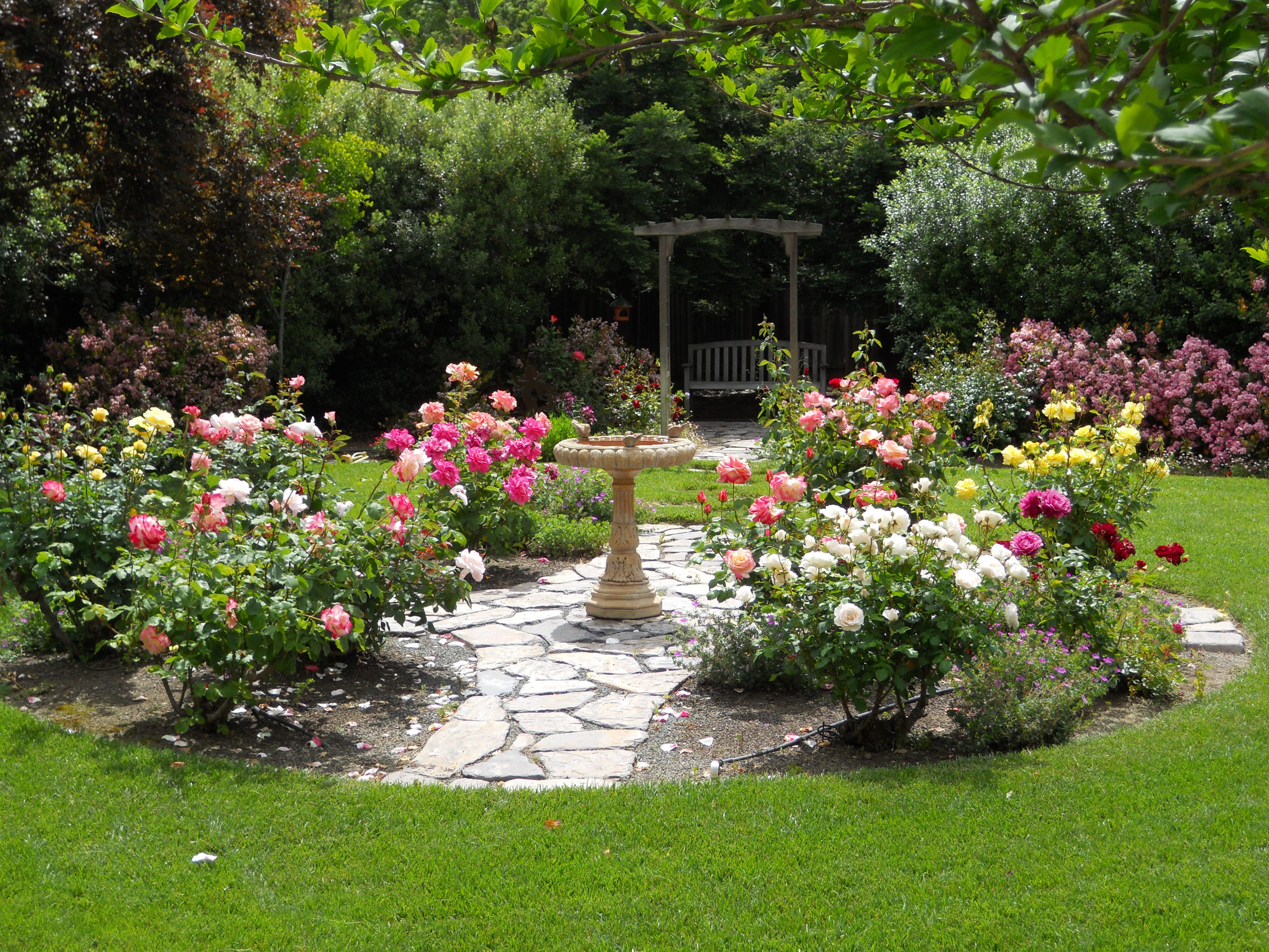 Simple Design Ideas Rose Garden Plans My Garden Rose throughout proportions 4000 X 3000
