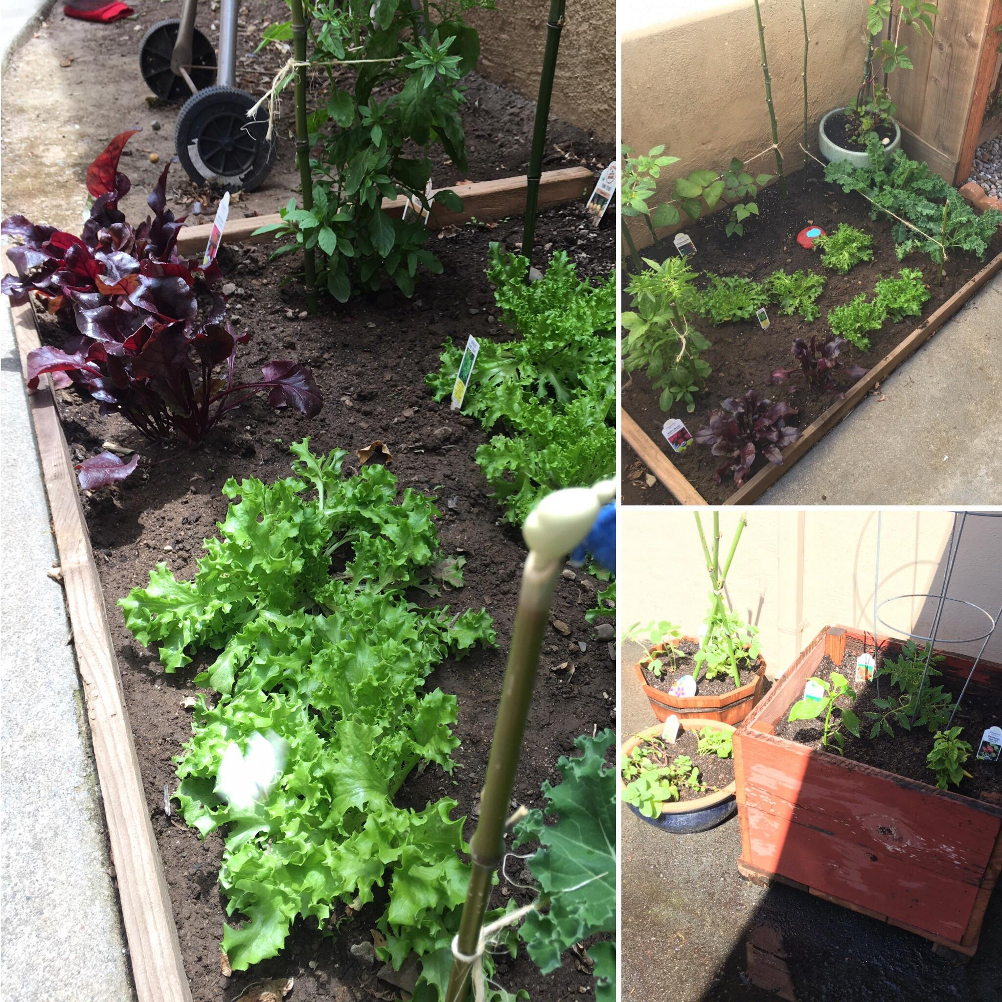 Small Space Gardening Advice Please We Have A Small Yard pertaining to dimensions 2048 X 2048