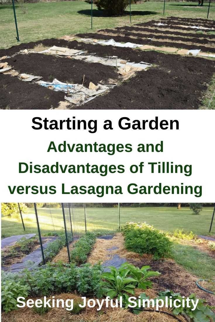 Starting A No Till Garden Homesteading Self Reliant inside measurements 735 X 1102